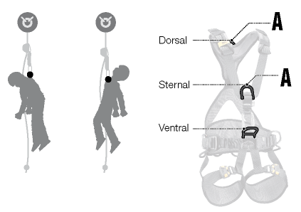 dorsal_vs_sternal.png